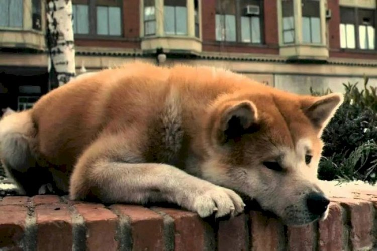 HACHİ: A DOG'S TALE